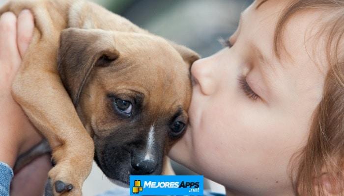 6 Mejores Aplicaciones Para Adoptar mascotas